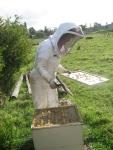 Toni, opening the hive