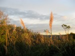 Sunset on the grasses